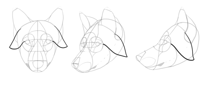 how-to-draw-wolves-drawing-head-15