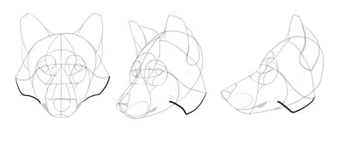 how-to-draw-wolves-drawing-head-16