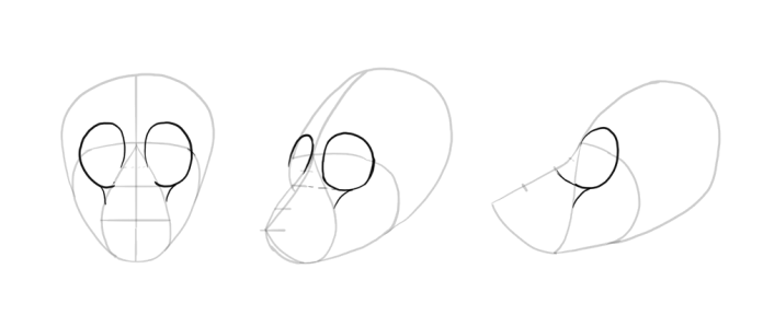 how-to-draw-wolves-drawing-head-7