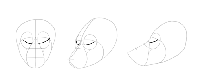 how-to-draw-wolves-drawing-head-8