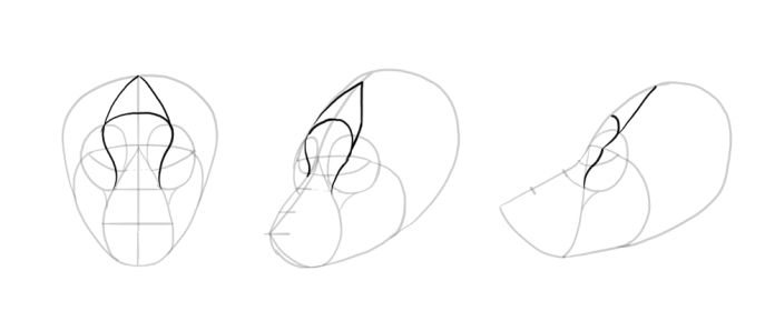 how-to-draw-wolves-drawing-head-9