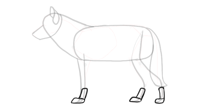how-to-draw-wolves-drawing-process-6