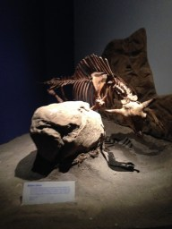 The Ice Ages Gallery: Modern Bison display