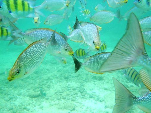 Snorkeling Langkawi