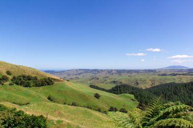 New Zealand Farm Land 1