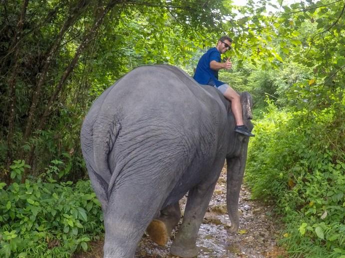 Phang Nga Elephant Park Thailand