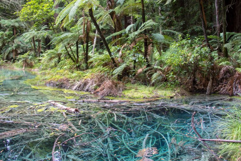 Rotorua Redwoods 12