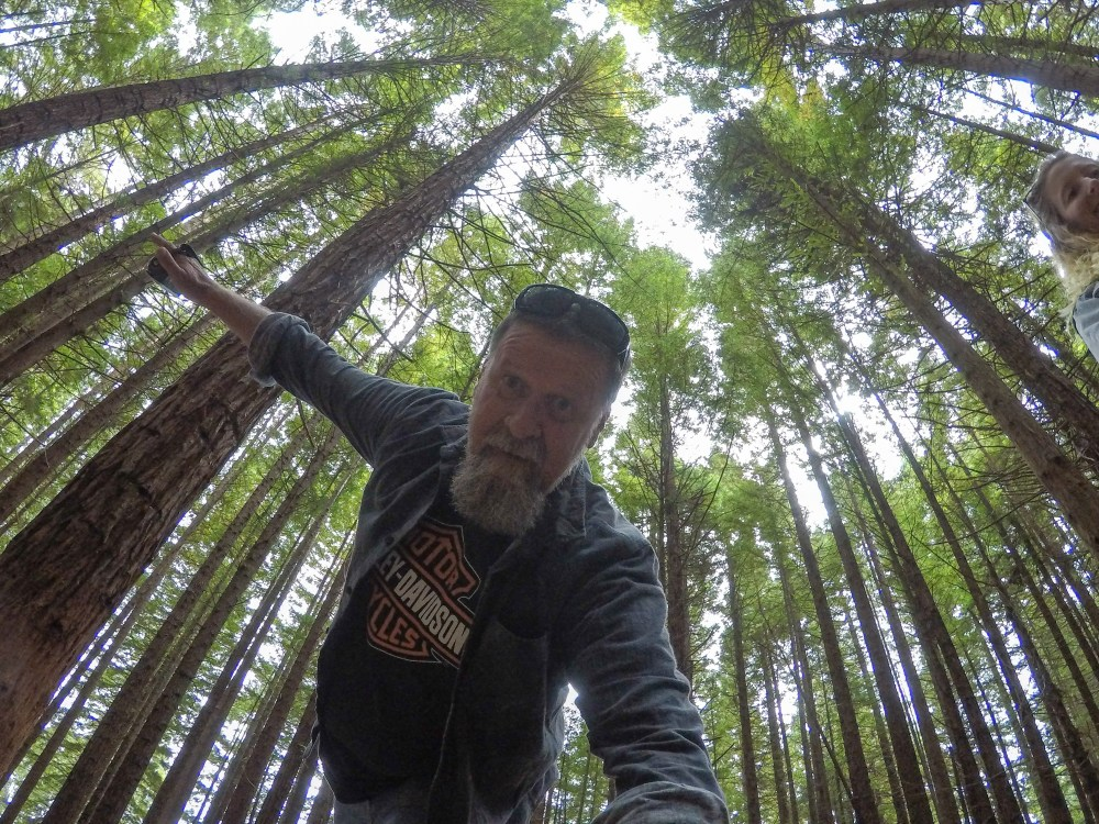 Redwoods Treewalk Rotorua