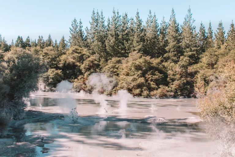 Taupo Mud Springs