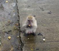 Thailand Monkey 1