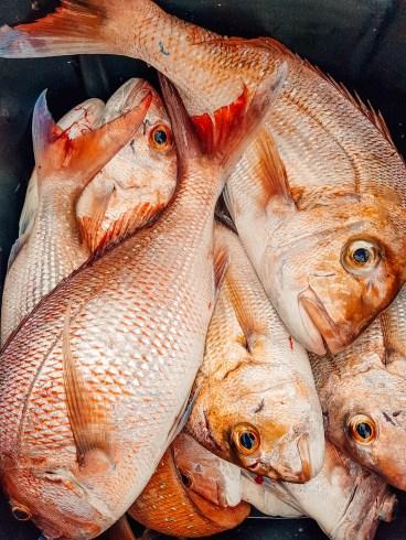 Coromandel Fishing 9