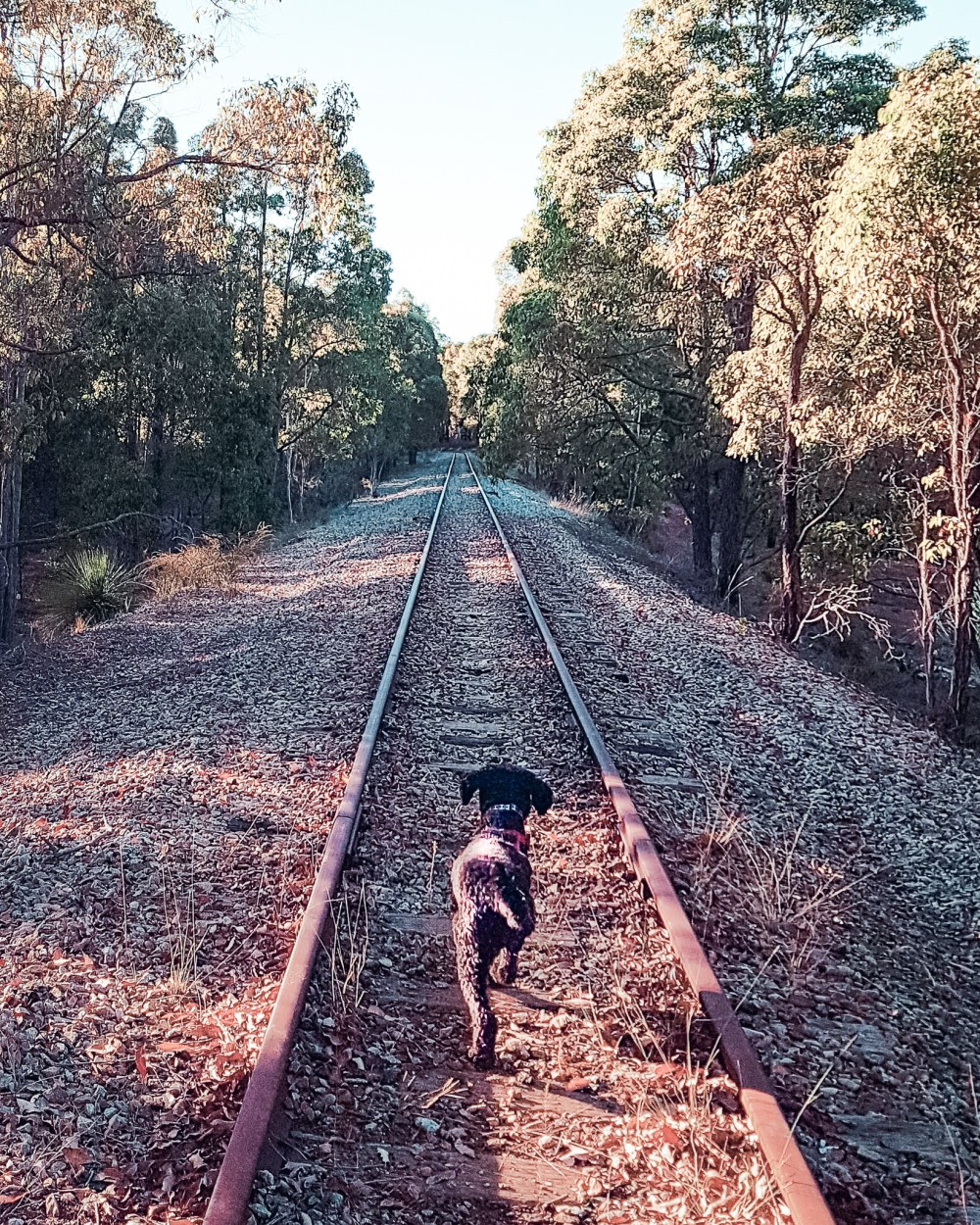 Jarradale Heritage Rail 1