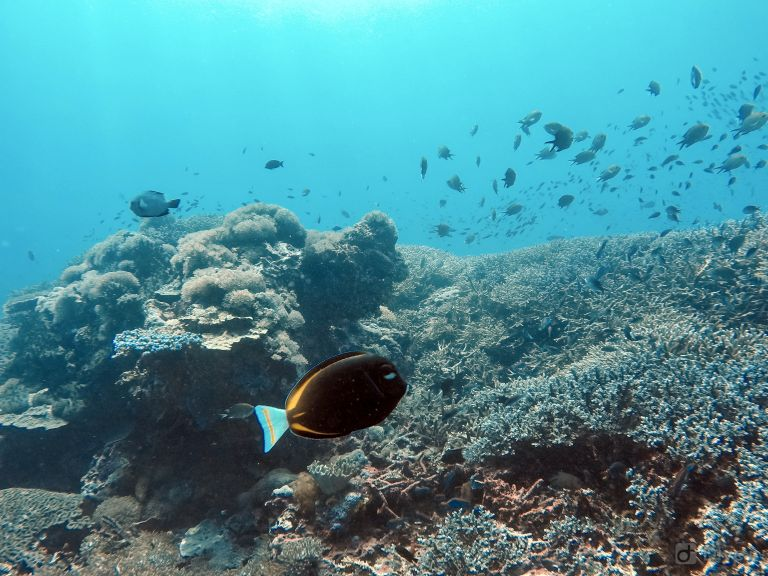 Coral Reef at Toya Pakeh