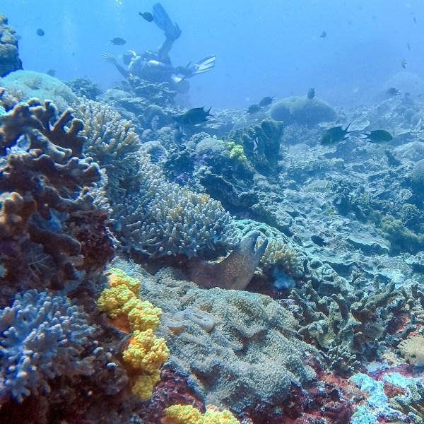 Moray Eel at Toyah Pakeh