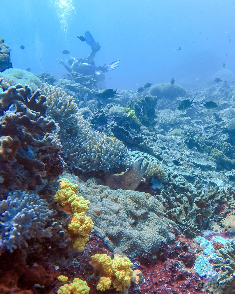 Moray Eel at Toyah Pakeh