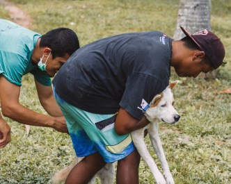 Paws of Lembongan Nusa Ceningan Vet Dog Vaccination