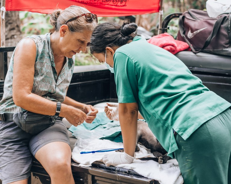 Paws of Lembongan Nusa Ceningan Vet Dog Donna