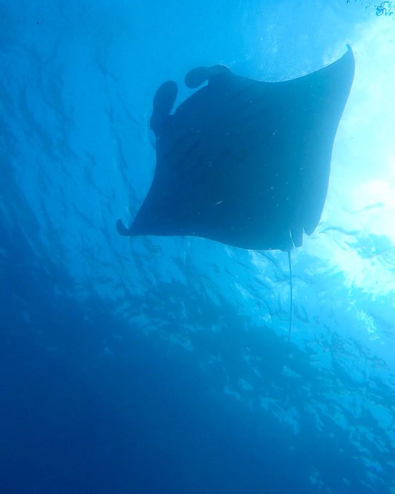 PADI Manta Conservation Specialisation Blue Corner Dive Nusa Lembongan Penida Bali Indonesia