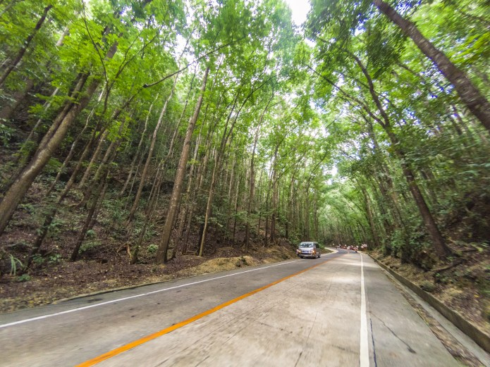 Man Made Forest Bohol Philippines