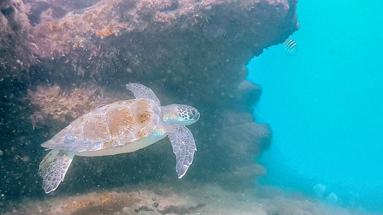 Buzios Turtle Scuba Dive Rio de Janeiro Brazil South America