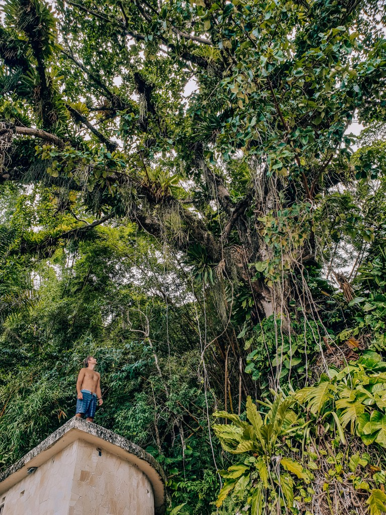 Ilha Grande Rio de Janeiro Brazil Old Tree