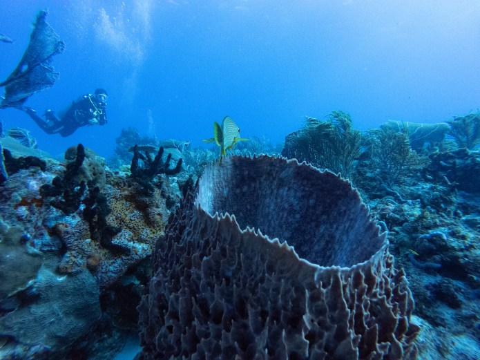 Reef Diving Cancun Mexico