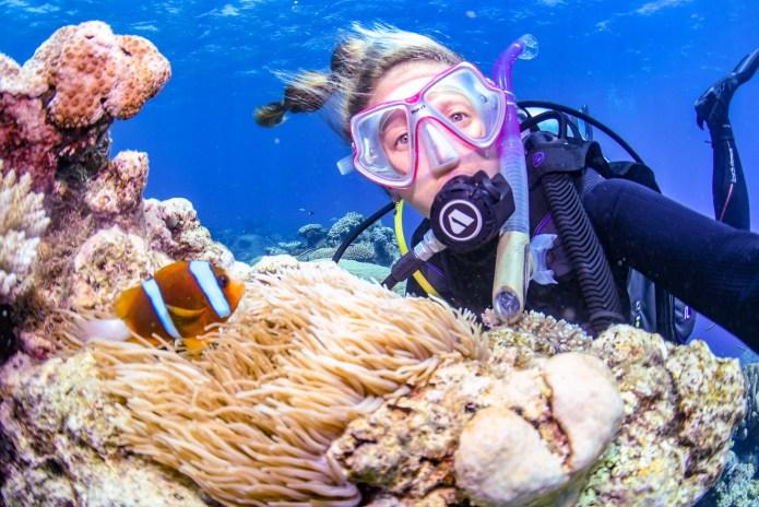 Barrier Reef Fish Great Barrier Reef Cairns Queensland Australia