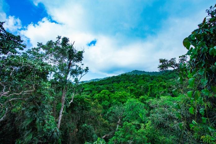 Daintree Rainforest Discovery Centre Views Queensland Australia