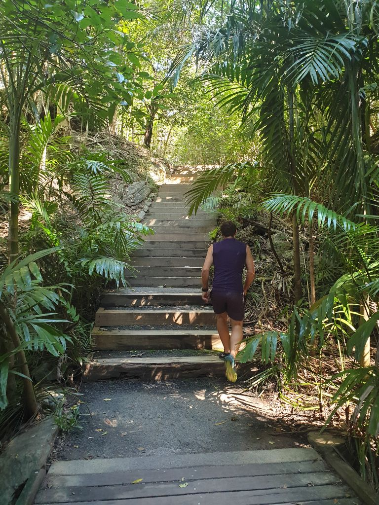The Arrows Hike Cairns Queensland Palms