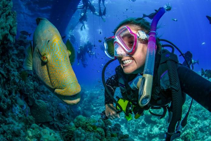 Wally Great Barrier Reef Cairns Queensland Australia