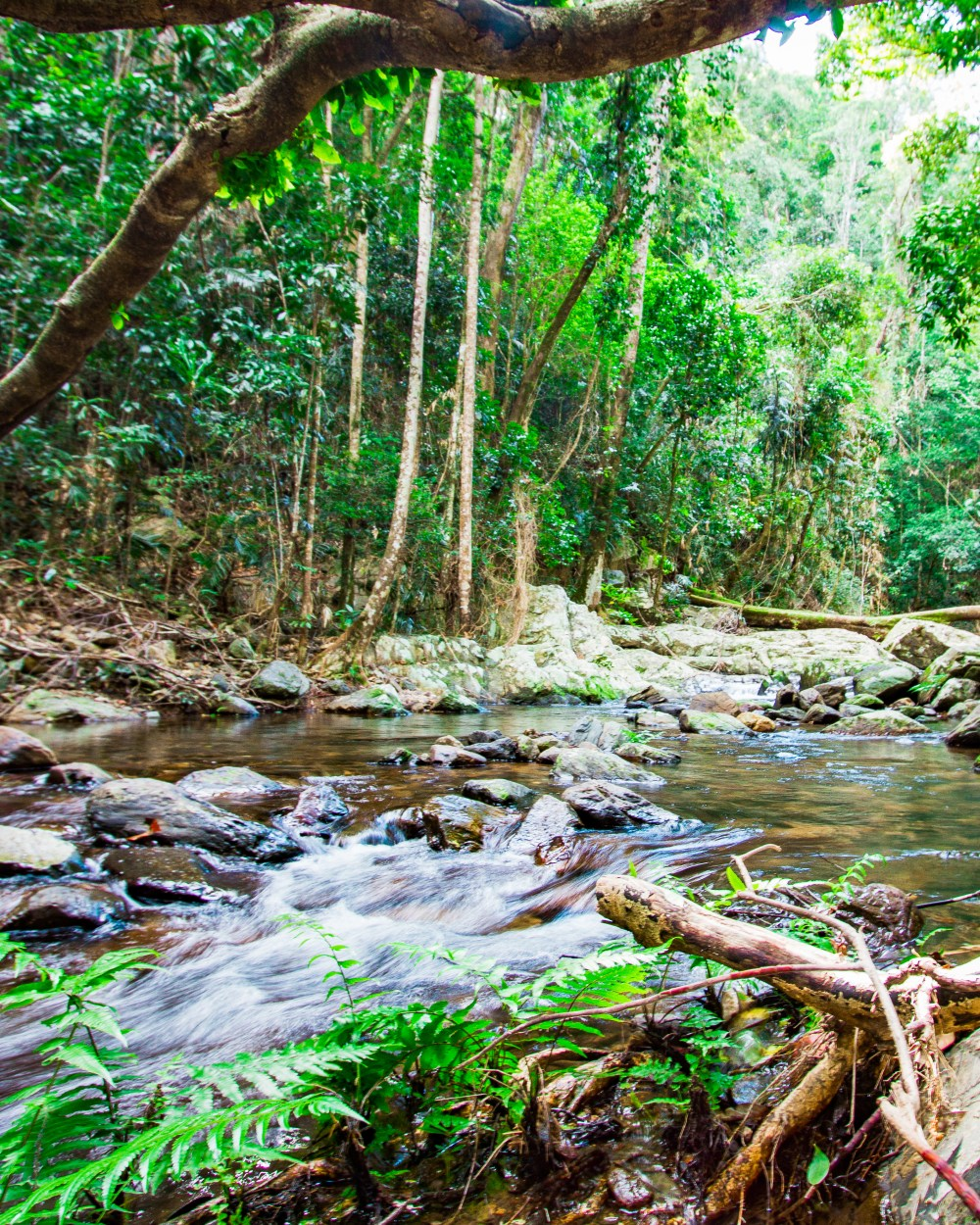 Stoney Creek Hike Cairns Queensland Australia
