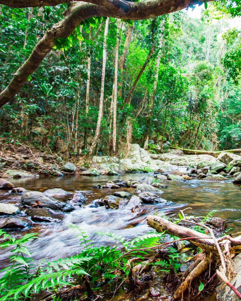 Stoney Creek Hike Cairns Queensland Australia
