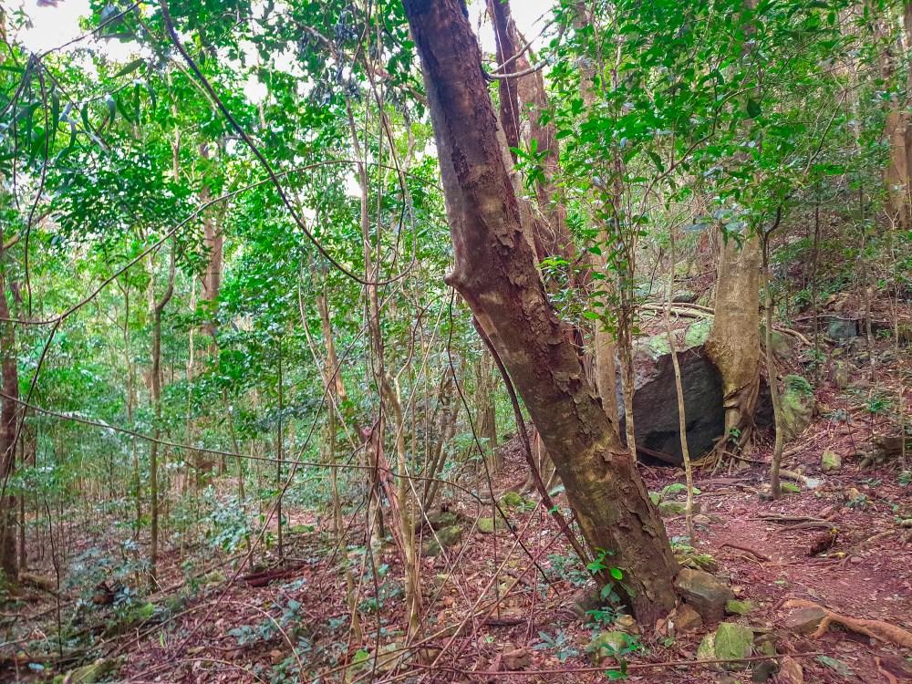 Stoney Creek Walking Track Cairns Queensland Australia