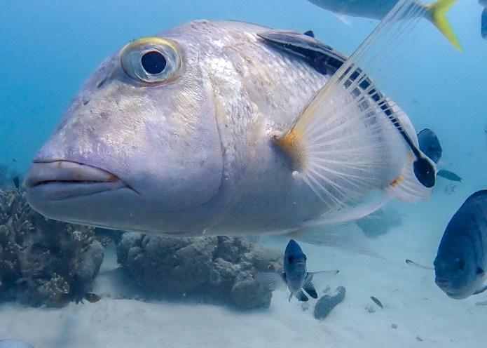 Fish Cairns Great Barrier Reef Scuba Dive Queensland Australia