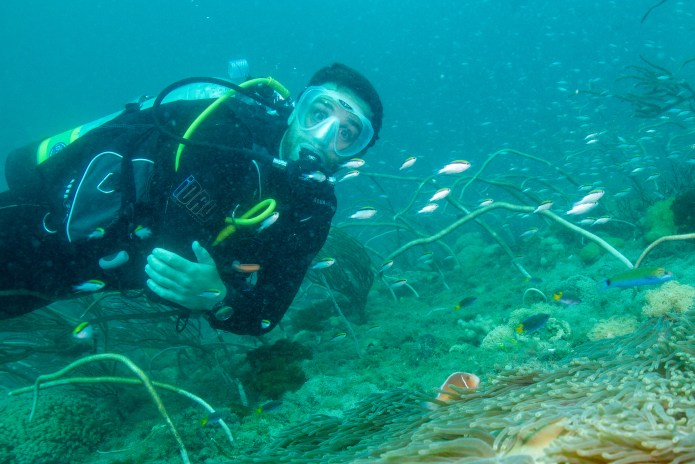 SS Yongala Queensland Australia Anemone Fish