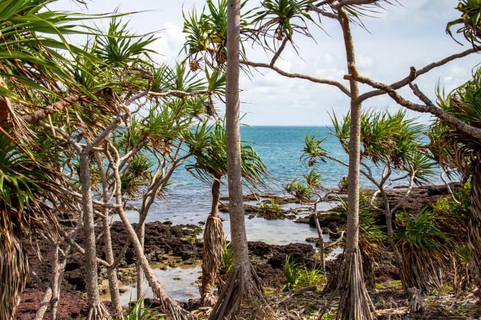 Coast Cape York Queensland Australia