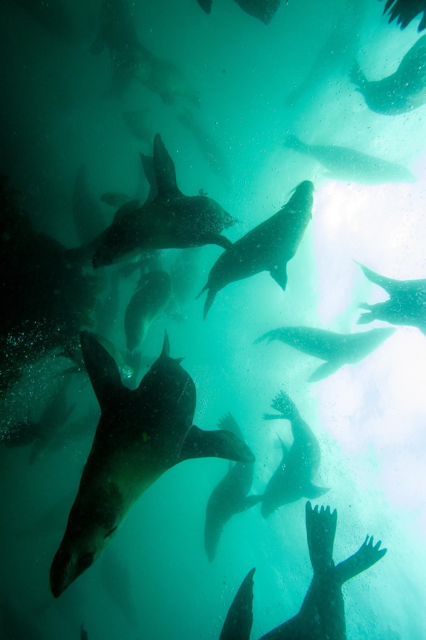 Scuba Diving Jervis Bay NSW Australia