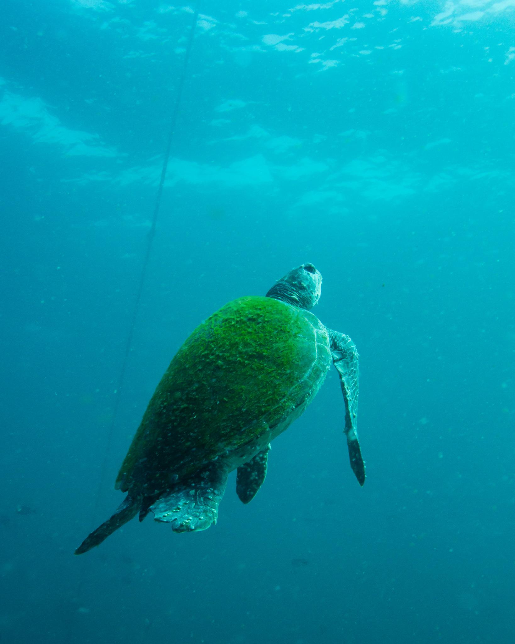 Turtle Julian Rocks NSW Australia