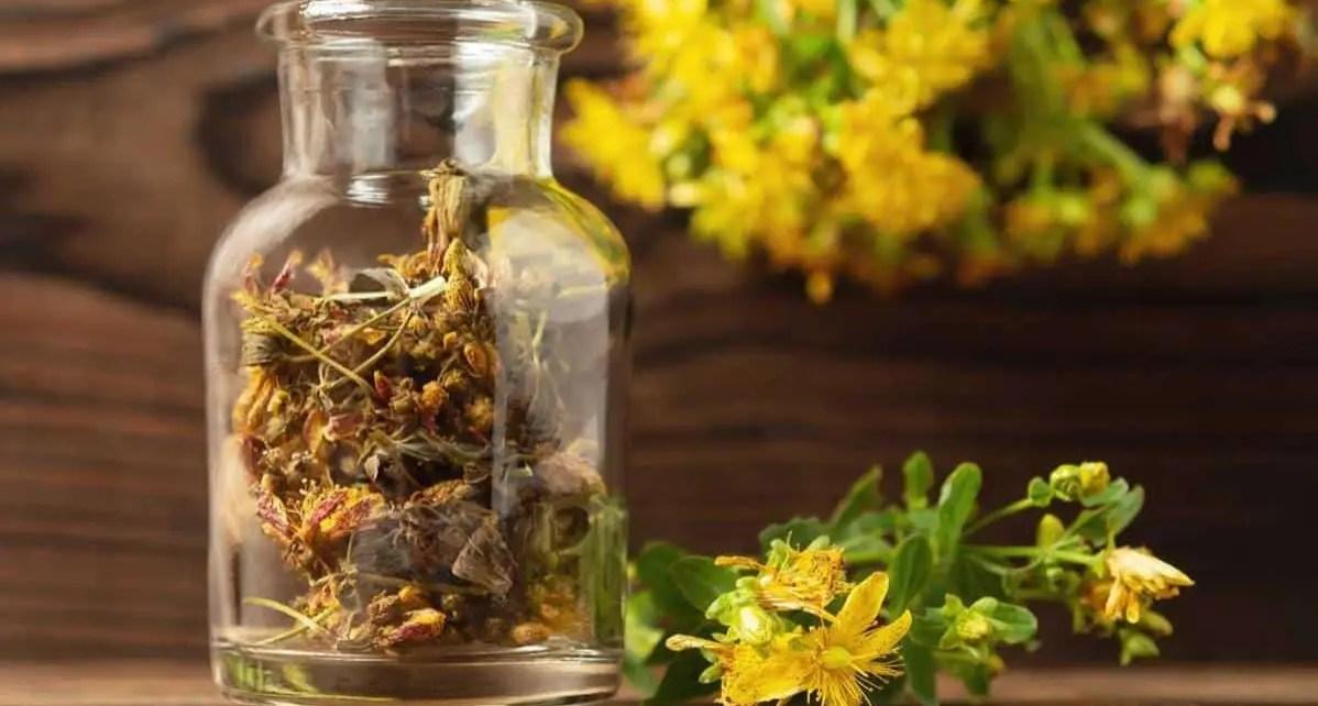 Las plantas medicinales nos s?lo pueden servirte de decoraci?n, tambi?n ofrecen beneficios a la salud.Conoce cu?les pueden ayudarte a disminuir la ansiedad