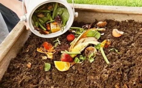 Conocer el mundo del compostaje puede ayudarte; ya que estar?s reciclando estos desechos y d?ndoles un mejor uso; es una forma de conectarse con la tierra