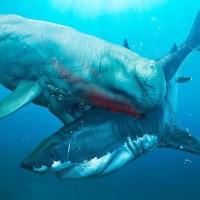 ¿Qué causó la extinción del megalodón?