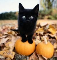 gatto-nero1_large