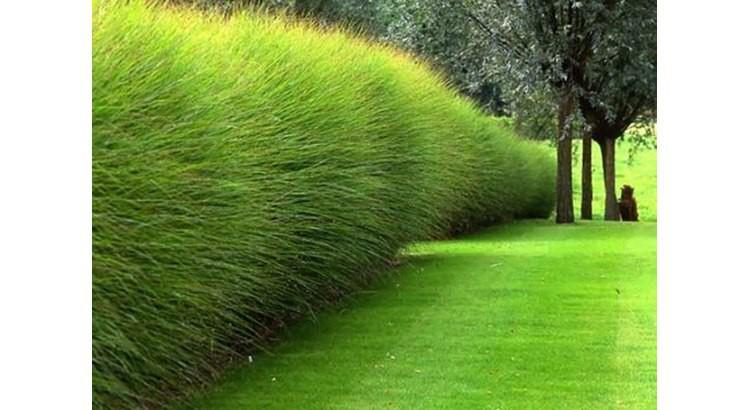 quelles plantes pour un brise vue