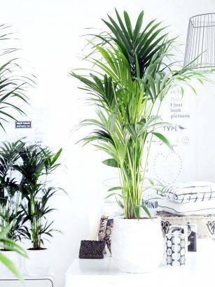 nos 24 plantes d interieur preferees
