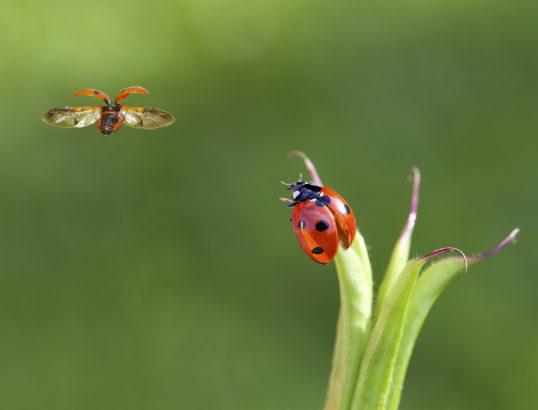 12 conseils pour les attirer au jardin