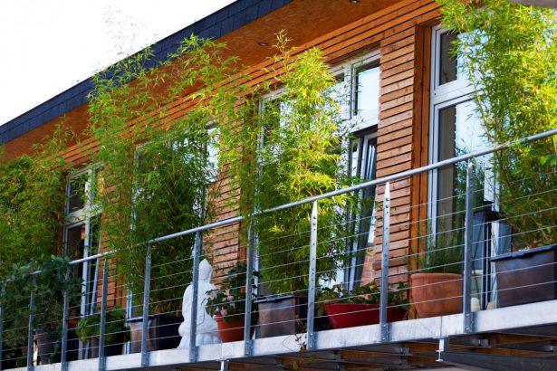 plantes pour une terrasse et un balcon