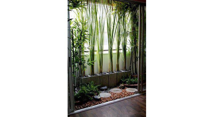 balcon 12 plantes brise vue pour une