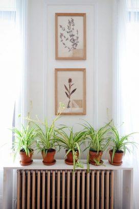 peut on placer des plantes d interieur