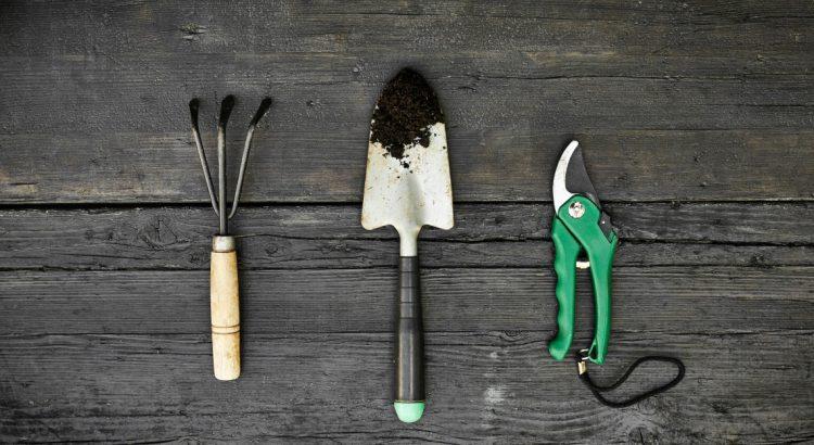 lidl propose des outils pour entretenir