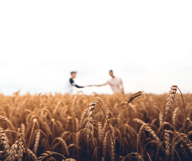Image of a wheat field, with two men in the background shaking hands